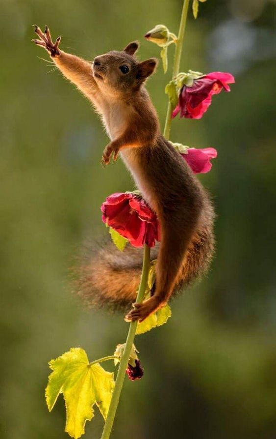 62 CUTEST AND MOST BEAUTIFUL SQUIRREL PICTURES